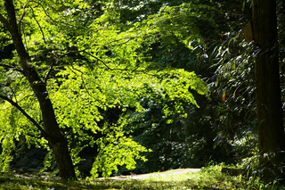 greentones20110518-01.jpg
