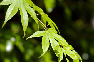 greentones20110518-03.jpg
